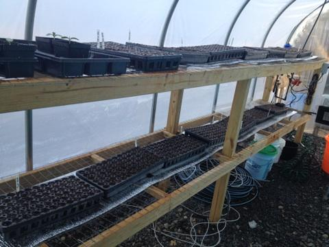 Greenhouse started.